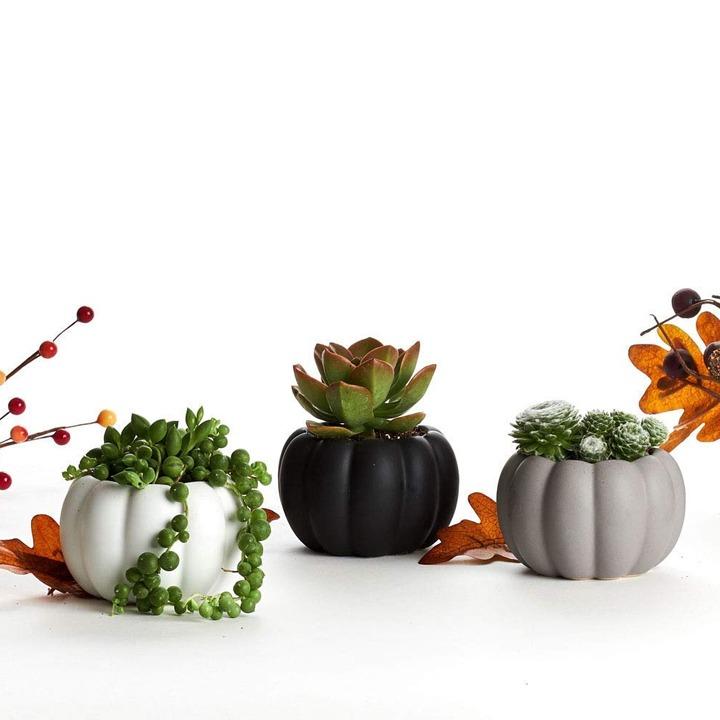 Pumpkin trio succulent planters