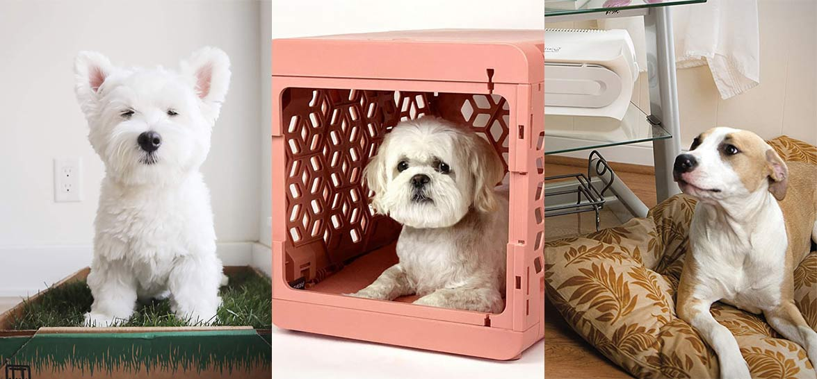 27 Things For A Dog In A Small Apartment Make your dog's life happy and comfortable in the tiniest space with these versatile gadgets.