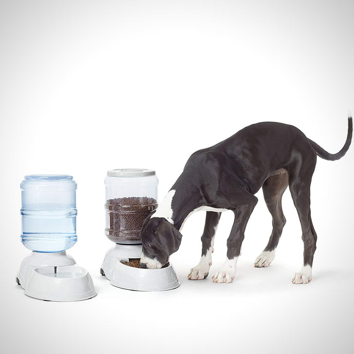 water and food dispenser bundle for dogs in an apartment