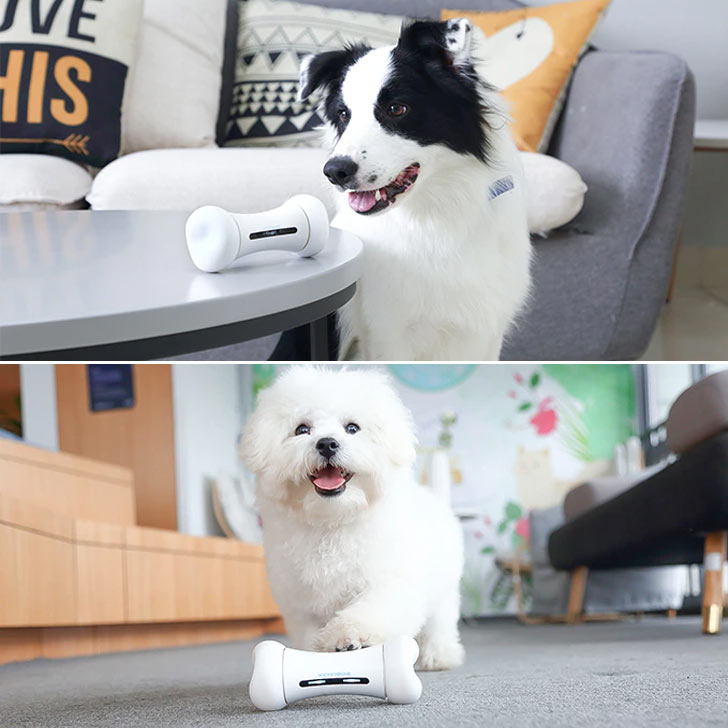 wickedbone automatic remote toy for dogs