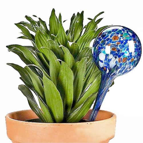 aqua globes plant hydration