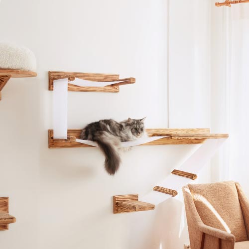 cat perches and shelves