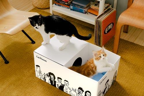 cat person boxe