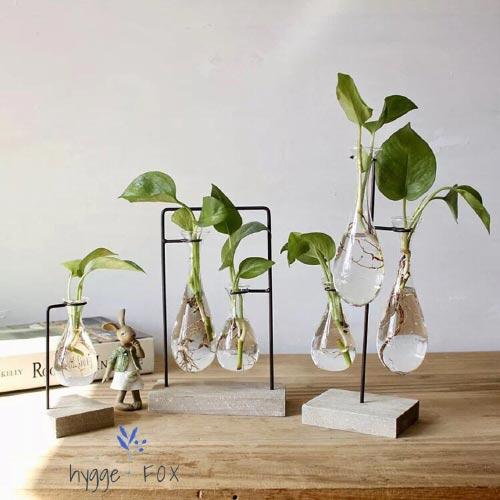 flower propagation for indoor garden