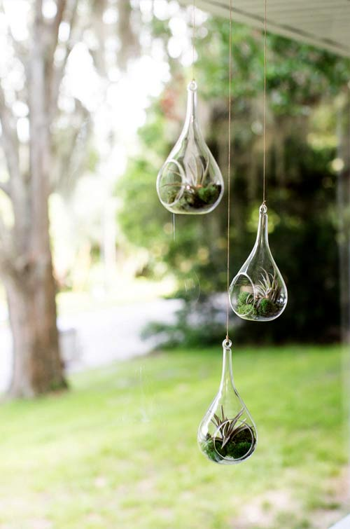 hanging glass planters for airplants