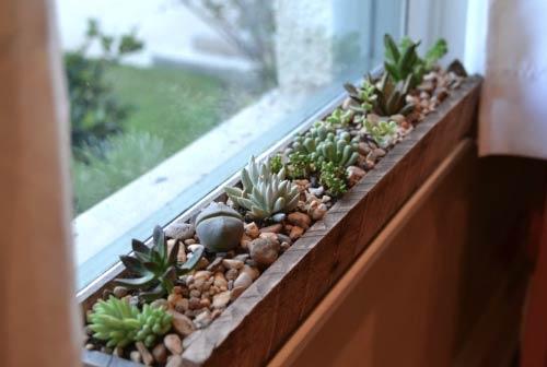 indoor gardening windowsill planter