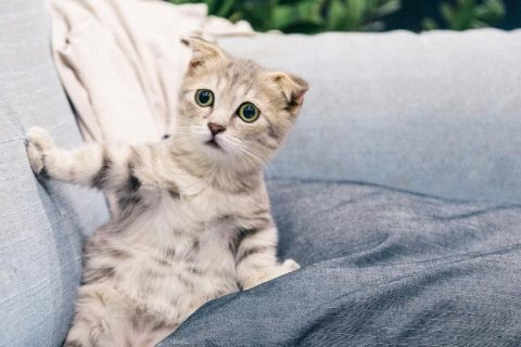 kitten on a couch