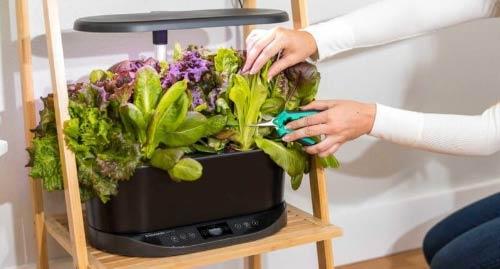 indoor gardening with lights aerogarden