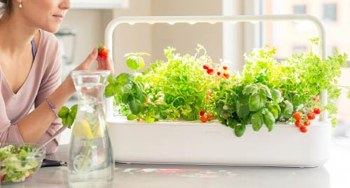 click and grow indoor gardening ideas