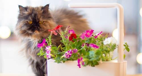 click and grow indoor gardening ideas