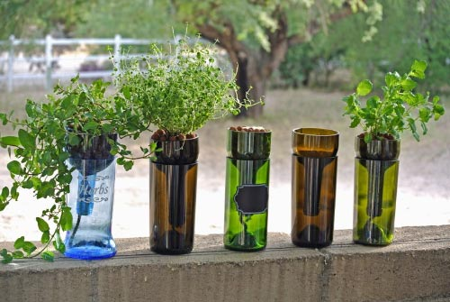 grow wine bottles
