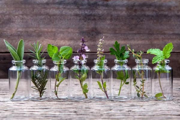 herb water propagation