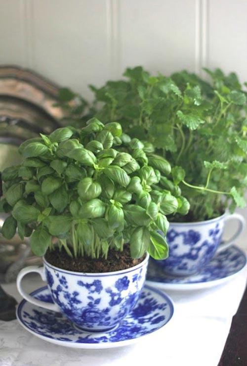 tea cup herb garden