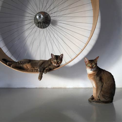 exercise wheel for a cat in a small apartment
