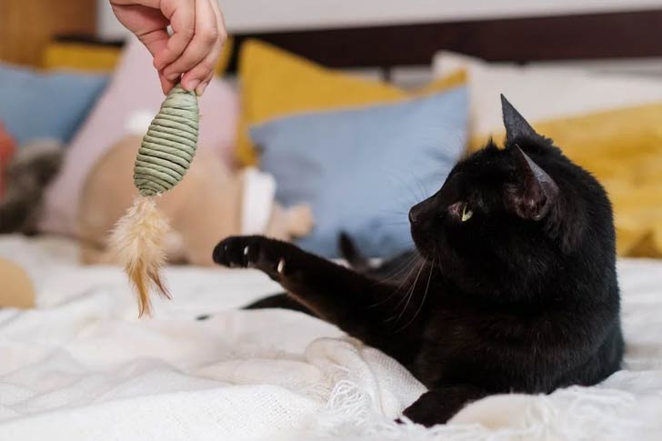 diy toys for a cat in a small apartment